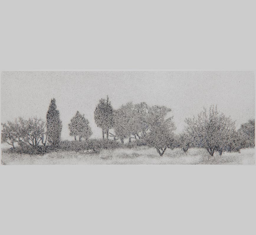 Greek landscape painting. Wild olive trees in a field. Title: Trees in Mist